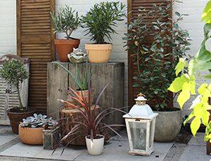 ibiza-tuin plantenhoekje