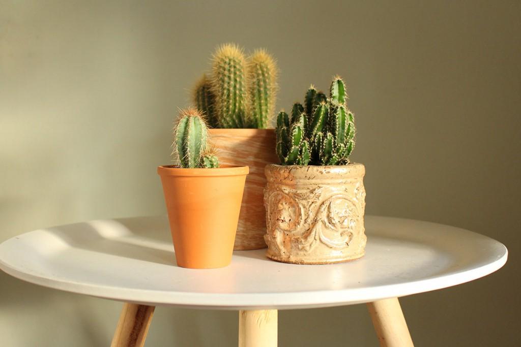 stylen met cactussen